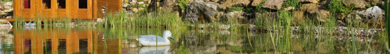 natur-schwimmteich
