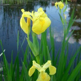 Wasserpflanzen-Logatainer