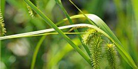 Wasserpflanzen Logatainer