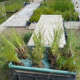 Pflanzpaket klein (30 Pflanzen für 4m² bis 5m²)